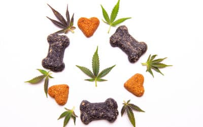 Cannabis-Infused Pet Treats