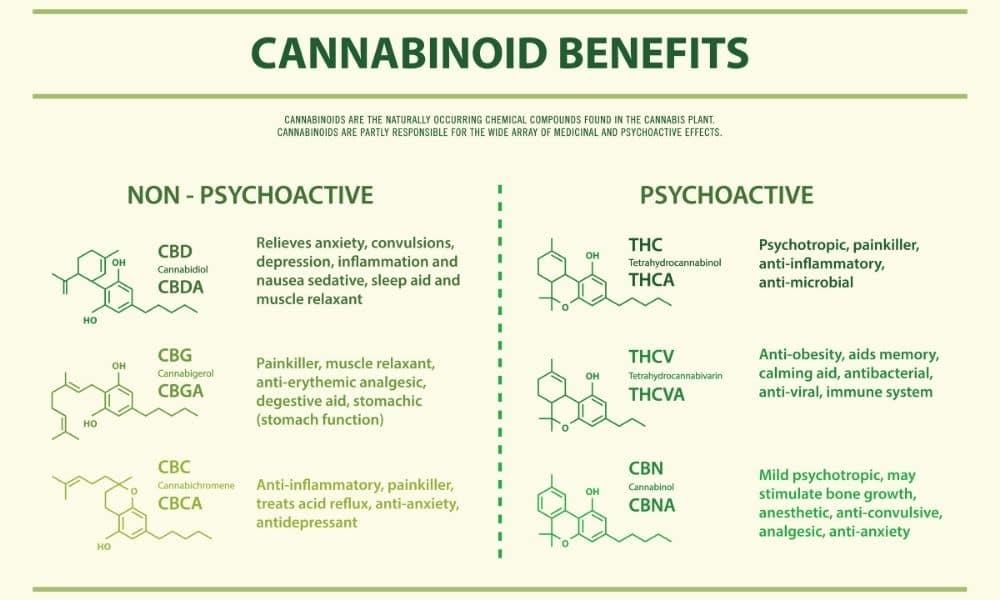 thc cbd cbn infograph